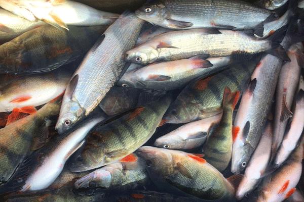 Fischzucht name gleich programm smartfisch aquakultur for Zierfisch teich